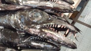 Espada fish at the market in Funchal.